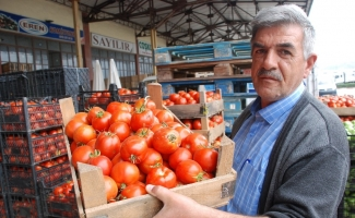 Tokat'ta domates 20 kuruşa düştü
