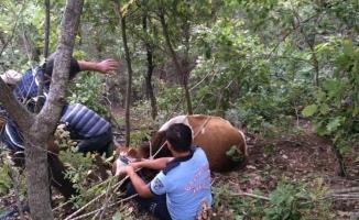 Uçuruma düşen ineği itfaiye kurtardı