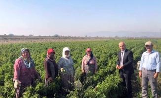 Başkan Aydın'dan çiftçi kadınlara sürpriz ziyaret