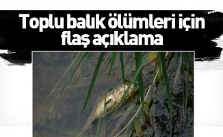 Bursa'daki toplu balık ölümleri için flaş açıklama