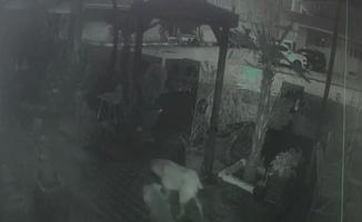 Kafası kopmuş kedi yavrusu bulundu