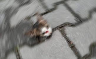 Kesilmiş yavru kedi kafası bulundu