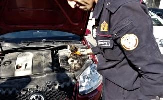 Yardım etmek için durduğu yaralı kedi aracın içine kaçtı