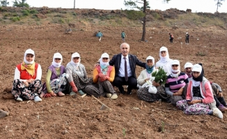 Başkan Davut Aydın, mevsimlik işçilerle fidan dikti
