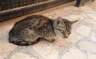 Görme engelli yavru kediyi hayata bağladılar