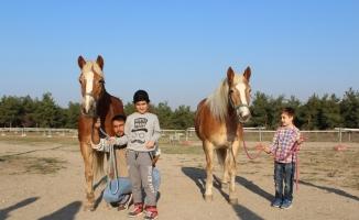 İzmir'in fayton atları ikinci baharlarını Bursa'da yaşıyor