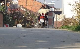 Motosiklet hastası köpeği görenler şaşıp kalıyor