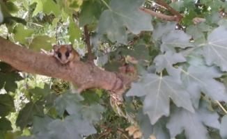 Nadir bulunan hayvanı bulup Bursa'da yaşadığını ispatladı