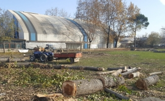 Tesislerin yanındaki ağaçlar kesildi