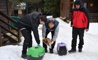 Uludağ'da yavru köpekler donmaktan kurtarıldı