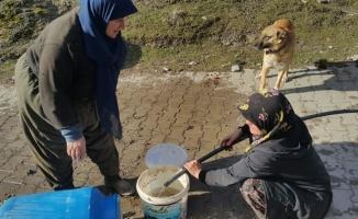 Köyde çıkan yangına kadınlar kovalarla su taşıyarak müdahale etti