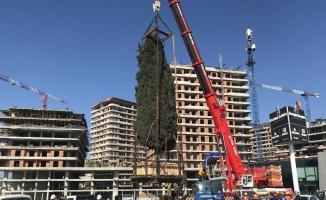 (Özel) 55 yıllık selvi ağacı işte böyle taşındı