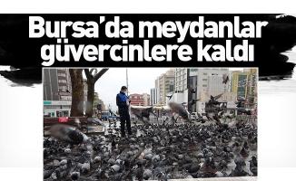 Bursa'da meydanlar güvercinlere kaldı