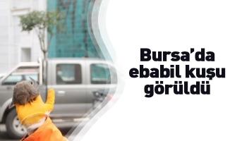 Bursa'da ebabil kuşu görüldü