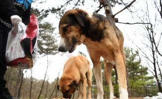 Kestel'de sokak hayvanları için 1 ton mama dağıtıldı