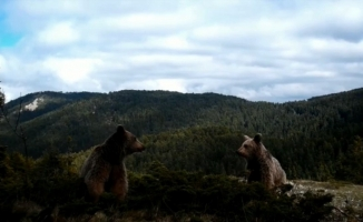 (Özel) Fotokapana takılan yaban hayvanlarından belgesellik görüntüler
