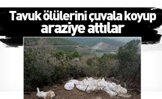 Tavuk ölülerini çuvala koyup araziye attılar