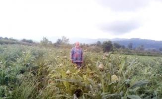 Mudanya enginarı sınırları aştı
