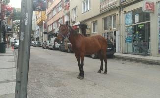 (Özel) Bursa caddelerinde başı boş at paniği