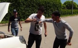 (Özel) Bursa'da gençlerin saatler süren kedi kurtarma operasyonu