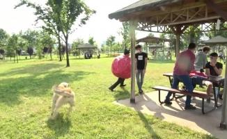 (Özel) Korona virüs kılığına giren ünlü tiyatrocuyu köpek kovaladı