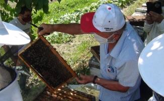 Arıların içine girdiler, eğitimi hem teorik hem pratik yaptılar
