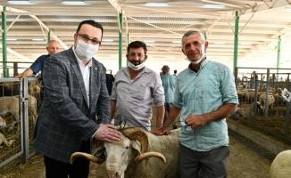 Başkan Kanar hayvan pazarını ziyaret etti