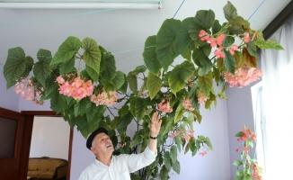 (Özel) Eşinin hatırasını yaşatmak için gözü gibi baktığı çiçek bütün odayı kapladı