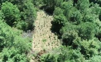 Drone ile kenevir tarları böyle tespit edildi