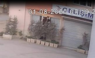 Teknoloji faresi önce kameraya sonra polise yakalandı...