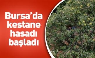 Bursa'da kestane hasadı başladı