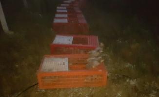 Bursa'da tabiata bin sülün salındı