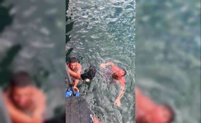 Denize düşen kediyi cankurtaran çıkardı