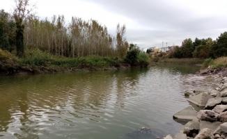 Bursa'da toplu balık ölümleri