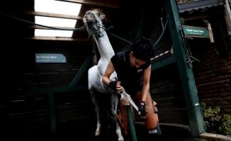 Kadının fendi atları yendi