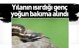 Yılanın ısırdığı genç yoğun bakıma alındı