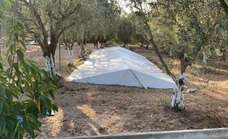 Zeytin tarlasında toplu mezar anlamına gelen Çatkı Mezar bulundu