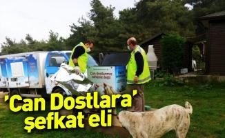 Bursa Büyükşehir Belediyesinden ' Can Dostlara' şefkat eli