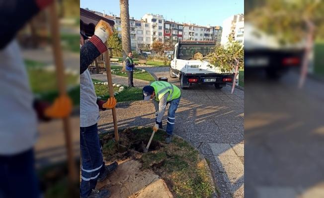 Mudanya Tekel Parkında kuruyan ağaçlar yenilendi