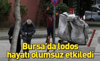 Bursa'da lodos hayatı olumsuz etkiledi