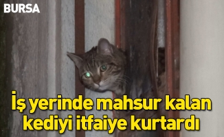 İş yerinde mahsur kalan kediyi itfaiye kurtardı