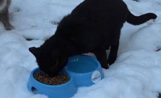 Karda kışta sokak hayvanlarını unutmadılar