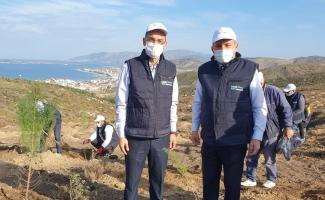 Limak Enerji Balıkesir'i ağaçlandıracak