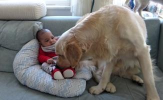(Özel) Köpek yeni doğan bebeği kimseyle paylaşmıyor
