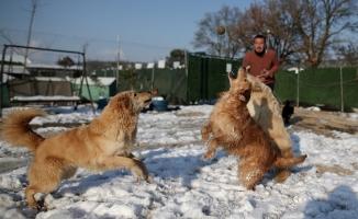 (Özel) Sahipleri tarafından terk edilen köpeklerin karda oynaması tebessüm ettirdi