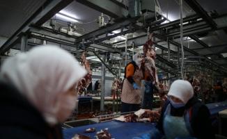 (Özel) 400 kadın kasap her gün 150 ton et işliyor