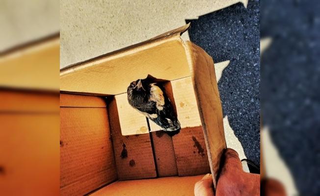 İtfaiye ekipleri, yuvasından düşen yavru kuş için seferber oldu