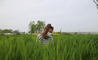 (Özel) Bursa'da kimyasal ve suni gübre kullanmadan üretilen buğdaylar çiftçiye örnek oluyor