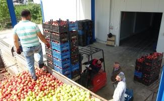 (Özel) Bursa'da tonlarca meyve soğuk hava depolarında kaldı