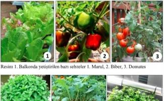 Pandemide balkon sebzeciliği psikolojiyi düzeltiyor